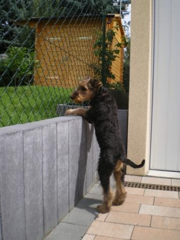 Was ist denn heut bei Nachbars los?