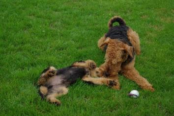 """Spiel mit meinem """"Bruder"""" Ivo"""