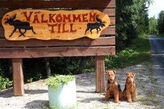 Auch Hunde sind auf Campingplätzen stets willkommen