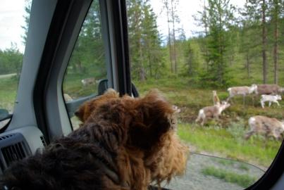 Rentiere! Da wäre ich jetzt lieber auf der anderen Seite des Fensters ...