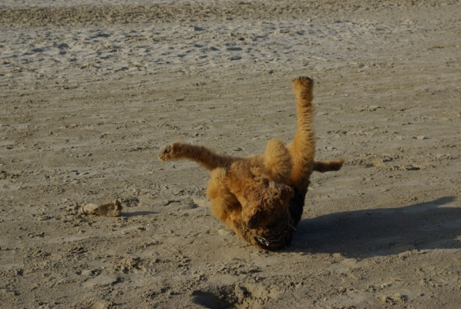 Gymnastik am Strand soll bekanntlich fit halten, Cliff ist ein Meister darin!