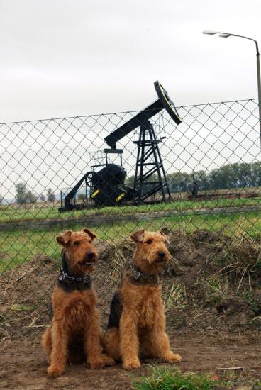 """Erdölförderung auf Usedom, da mussten unsere beiden """"Airdöl-Hunde"""" für den Fotografen posieren"""