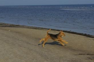 Auch Cliff hat etwas gefunden, ganz stolz rennt er davon.